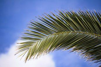 Palmsonntag